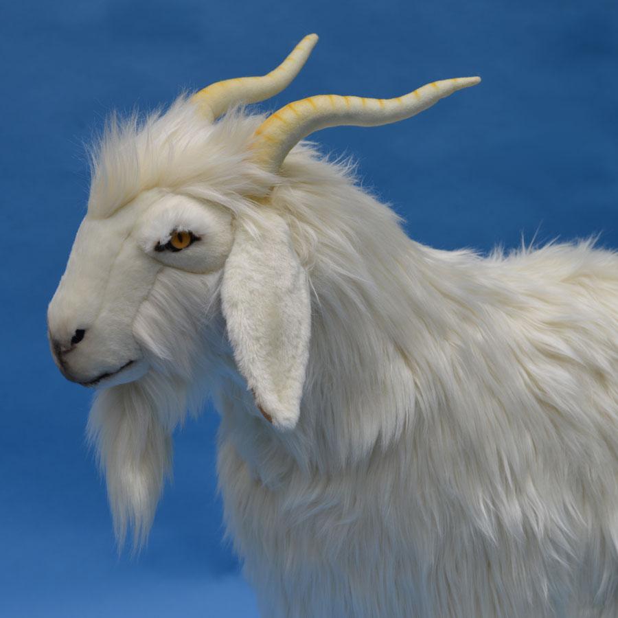 Cashmere Goat 40 Ins