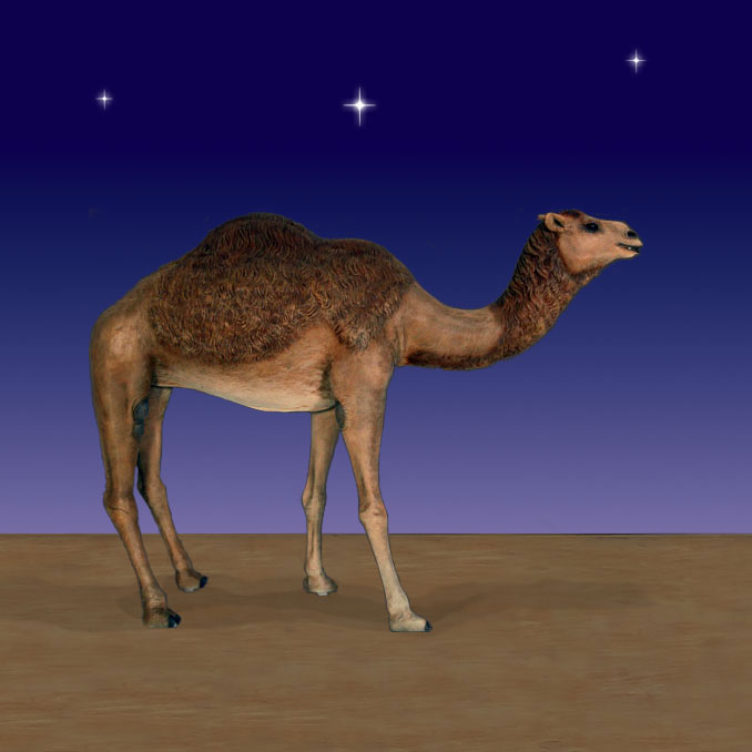 Nativity Camel
