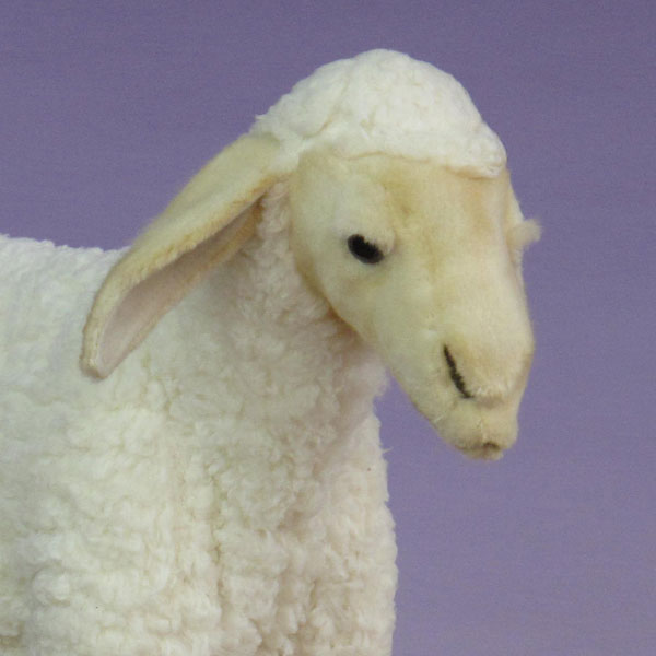 close up of plush sheep