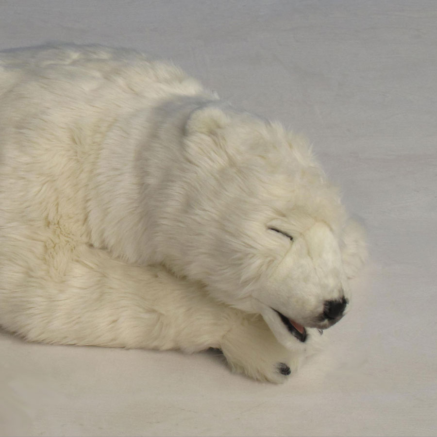 Close up of Hansa Polar Bear cub