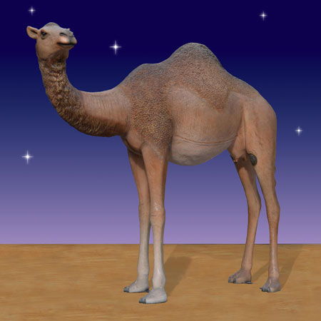 Huge Nativity Camel