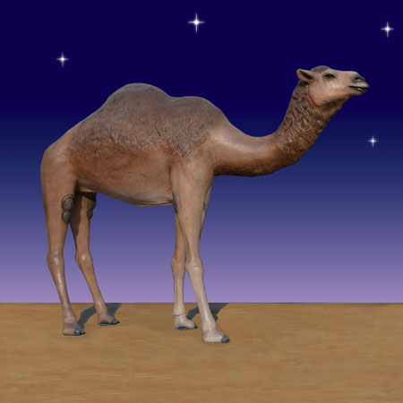 closer shot of nativity camel