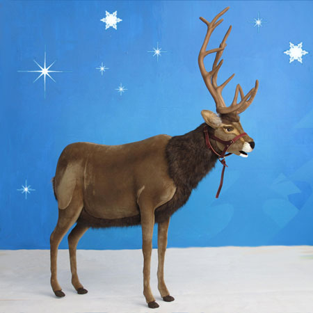 Reindeer with Halter