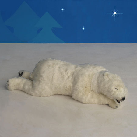 Sleeping Polar Bear Cub