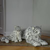 Hansa Snow Leopards